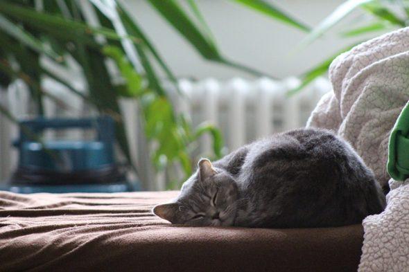 Redecorating for a Calmer Home Environment
